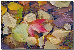Autumn Pond, Roger Lynn, October gratitude, list, Gratitude in Motion,