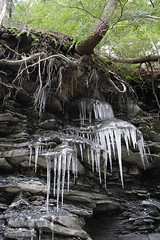 Roots and Ice