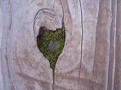 Heart in a Tree