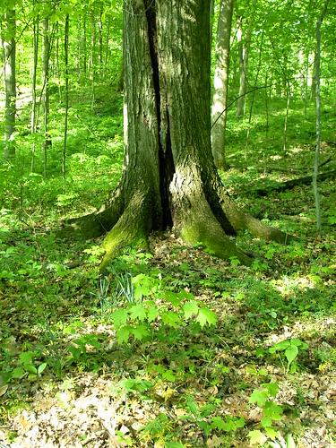 Moss Growing on Tree Stump in Rum Village