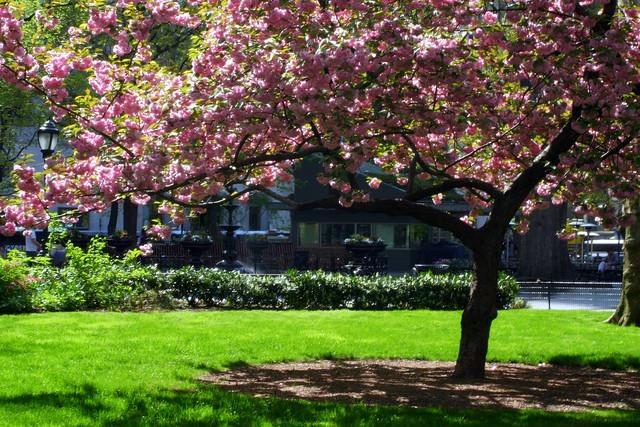 madison square park spring