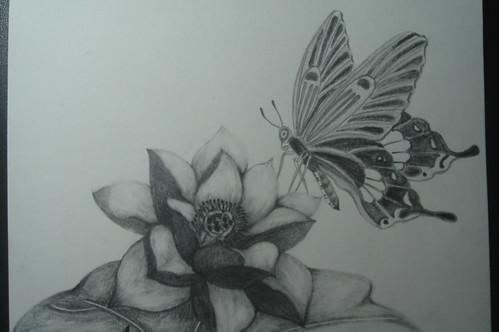 荷花與蝴蝶1-2