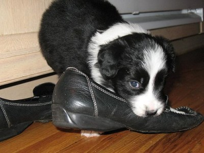 Sunny Eats Mom's Shoe