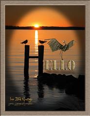 Iron Bird greetings