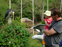 Tamao stork, Tash & Roo