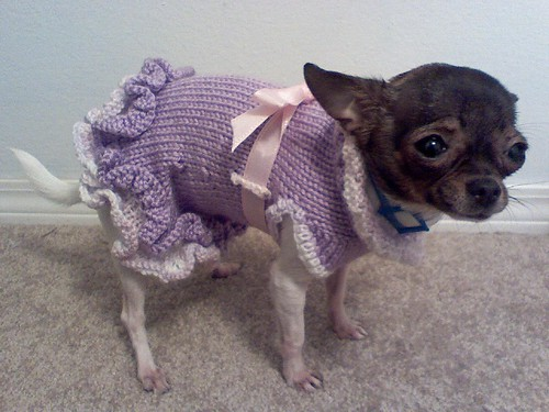 Large Crocheted Dog Sweaters Patterns