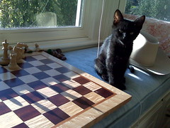 Chester Plays Chess
