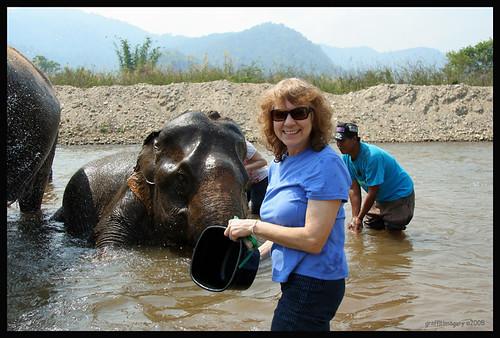ELEPHANT NATURE PARK , THAILAND 2008