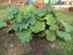 080301-garden179