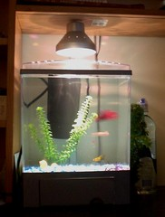 New Small Aquarium 2
