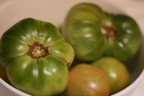 Green heirloom tomatoes