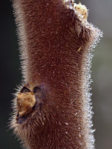 stem drips