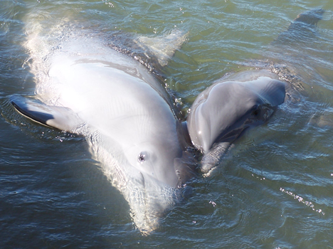 Dolphin Pals