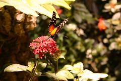 04.05.08 Smithsonian -- Butterfly Pavilion (12)