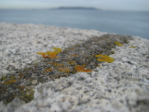 Lichen, Howth Head, James Joyce Tower