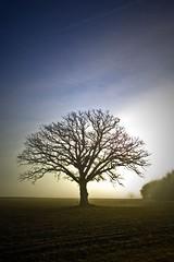 The Tree 45