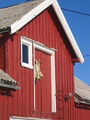 Fish drying in Lofoten, Norway