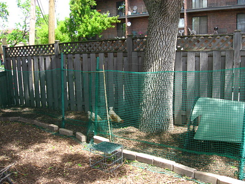 Home made chicken run