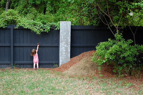 Trying to throw the pinecone over the fence.