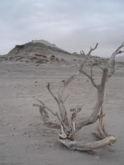 Un desert blanc, impression etrange et un vent limite oppressant font le decor de ce parc