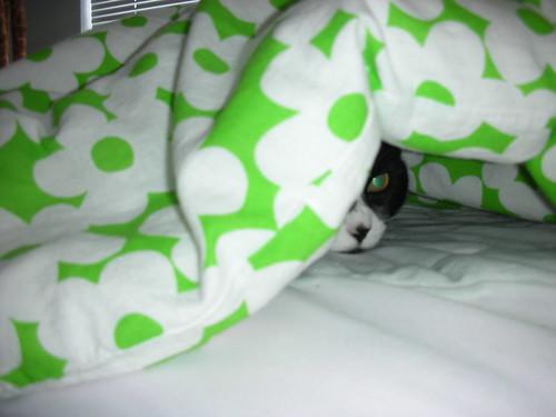 Stealth Sophia