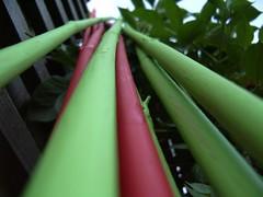 bean poles