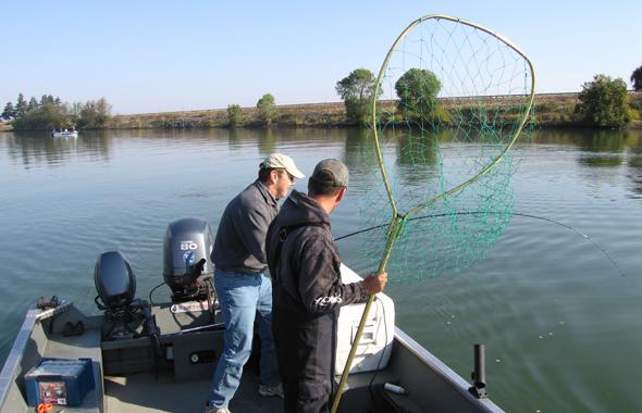 Netting a king salmon.jpg