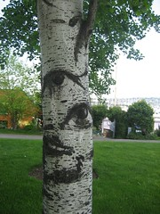 The trees have eyes!