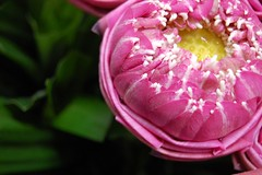 Solitary Lotus