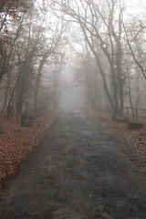Foggy morning in Lascaux