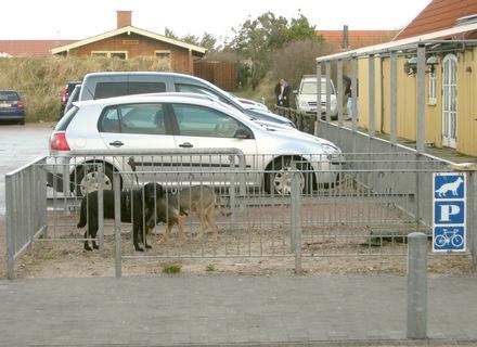 parcheggio per cani