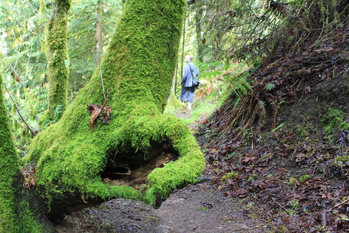 Cougar Mountain - Licorice Fern Trail - Moss Heart in Nature