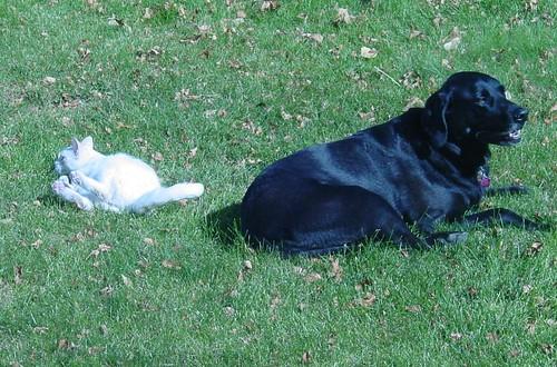Wonder Cat & Super Dog