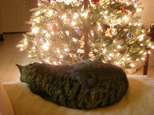 Christmas tree & a sleepy fuzzy