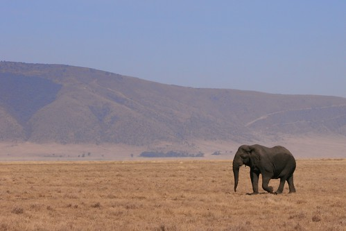 The Elephant by Doug Wheller on Flickr / CC by nd 2.0