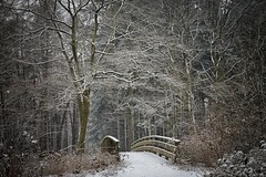 Winter in the woods..