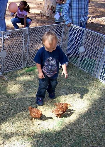 chicken terrorist