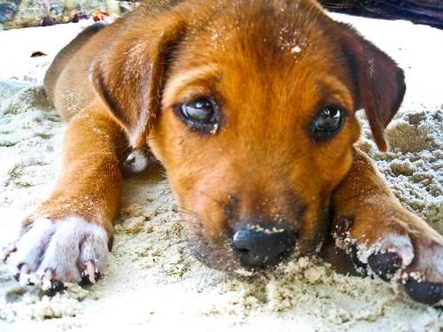 beach puppy!