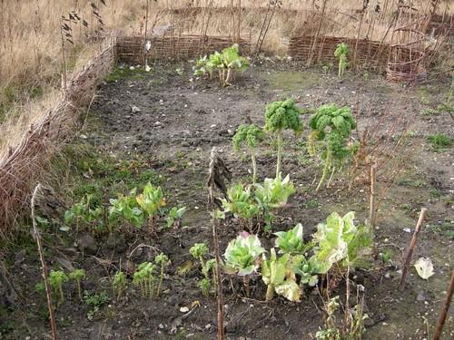 Mobile eco garden 4