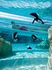 Dolphin Plunge Tunnel