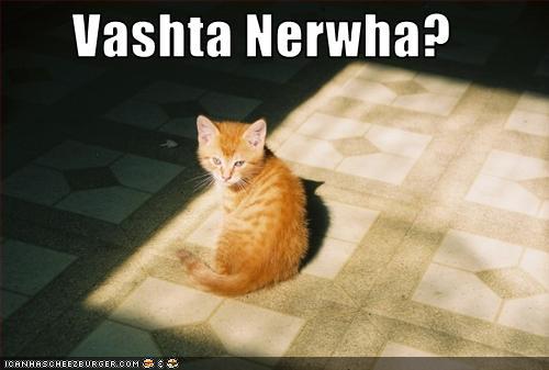 cat in sunbeam/shadow saying Vashta Nerwha?