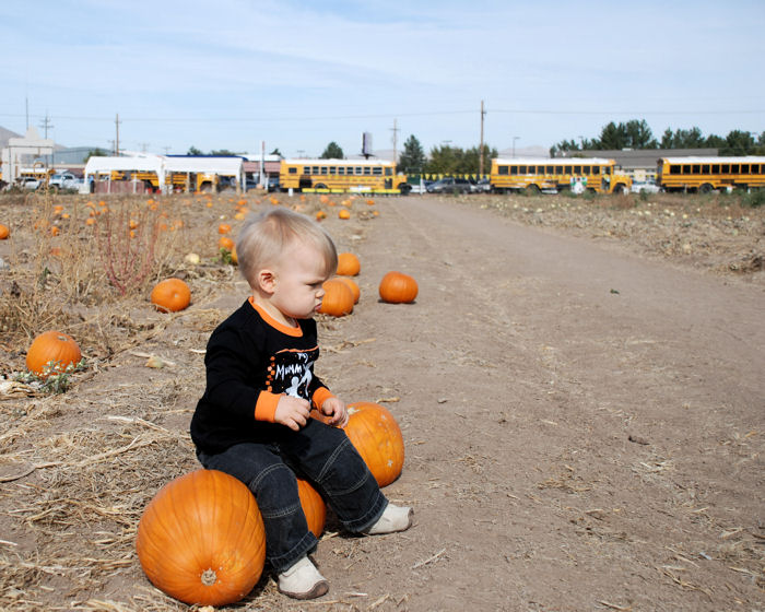 Pumpkin Patch with Busses