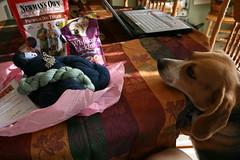 sami sniffs out her treats