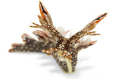 2499633510 b45db4d721 o Criaturas inacreditáveis do fundo do mar