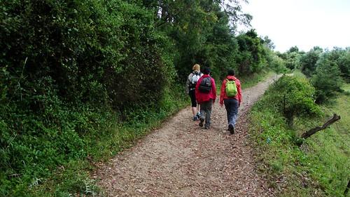 Camino de la Cuesta de San Antonio (San José del Valle)