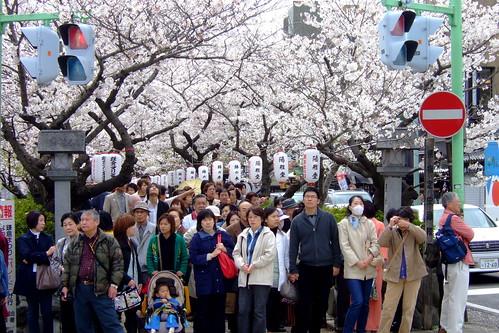 Sakura traffic