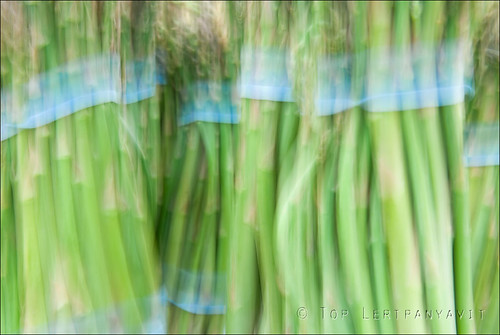 Impressions of asparagus