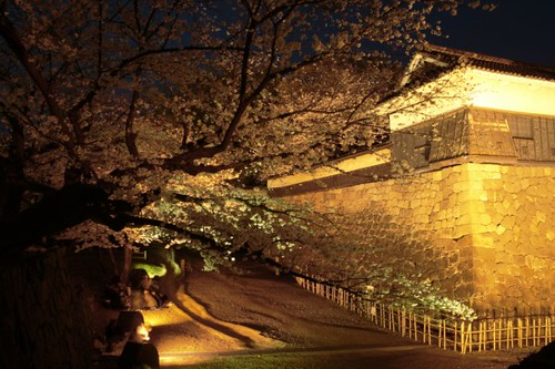Hanami under the castle wall
