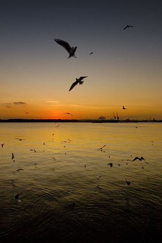 seagulls in the sunset, southampton