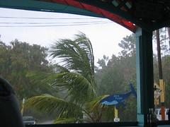 Tropical rain in Rincón